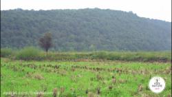 کارما / طبیعت آزاد در چر...