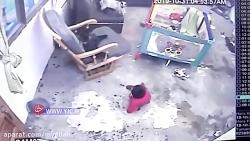 واقعیت:گربه نی نی را از سقوط از پله نجات داد-حقیقت:خدا با گربه نی نی را نجات داد