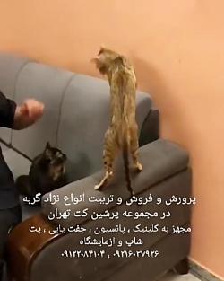 پانسیون گربه ۰۹۳۶۸۳۰۲۹۸۸
