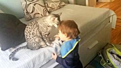 محبت گربه مائو مصری به خردسال