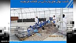 تولید نهال گواهی شده (لیبل آبی) در شرکت کشاورزی فجر اصفهان