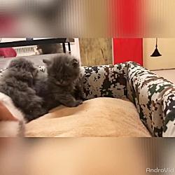 بچه گربه های ناز و گوگولی ۰۹۳۶۸۳۰۲۹۸۸