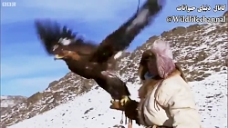 مستندزیبا از شکارعقاب طلایی