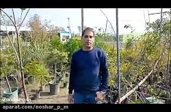 گلکده _ نوشر _ خشکبیجار