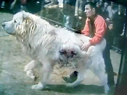 سگ هیولا به نام آلابای یا هیولایی به نام آلابای