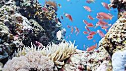 سفری جذاب به دنیای زیر آب | گشتی در میان صخره های مرجانی