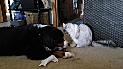 دوستی راگامافین با سگ