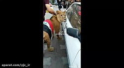 شیر، جواب سگ پلیس برای دفاع از مردم تظاهرکننده به خیابان آمد