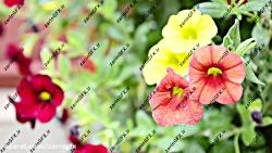 فوتیج ویدئویی باغ گل ها