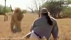 Amazing Wild Animals Attacks - Wild Animal Fights Caught On Camera | s