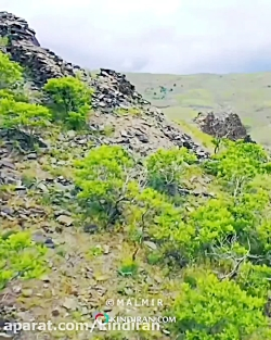 کایند ایران