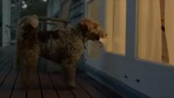 داستان سگ باوفا - فیلم کوتاه