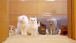 فروش بچه گربه های اپارتمانی و شجره دار ۰۹۳۶۸۳۰۲۹۸۸
