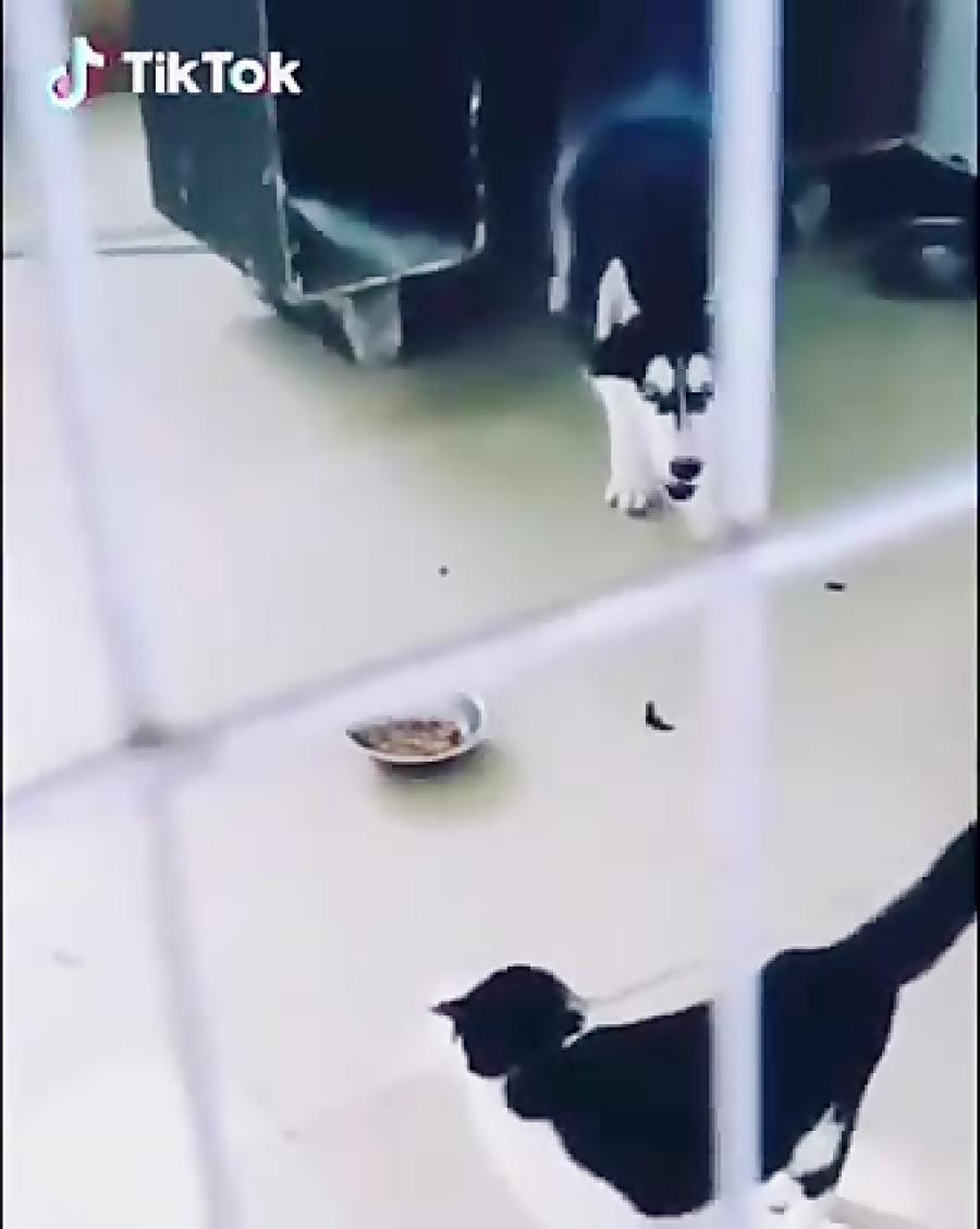 دعوای گربه و سگ