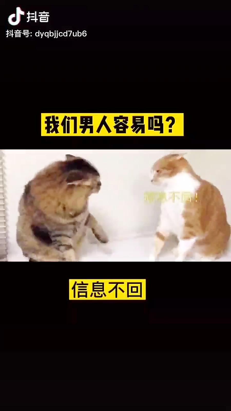 دعوای دو گربه