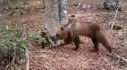 گذر یکسال در سه دقیقه در کلیپی از درختی در جنگل