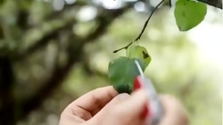تشخیص گیاه تک لپه و دولپه - زیست گیاهی دکتر چلاجور