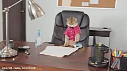 گربه های خرابکار  شرکت