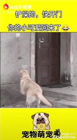 کلیپ های خنده دار حیوانات