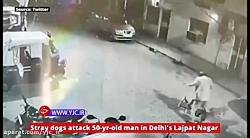 لحظه وحشتناک حمله سگ های ولگرد به مرد میانسال