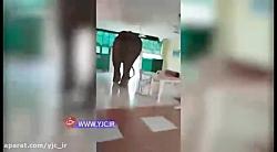 ورود فیل غول پیکر به رستوران ارتش