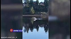 حمله عقاب به مرغ دریایی در دریاچه