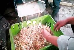 غلاف شکن بادام زمینی با جداسازی پوست 100 درصد