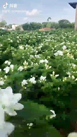 طبیعت زیباست