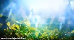 فرازی از دعای عرفه امام حسین ع با ترجمه - ترجمه دعای عرفه امام حسین ع