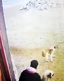 گوسفند دزدی با پراید !