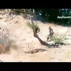تکنیکهای شکار توسط شیر
