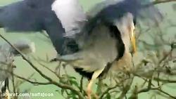 پرندگان زیبا | طبیعت زیبا