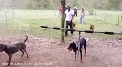 حمله گراز وحشی به انسان