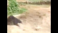 حمله خرس به مردم