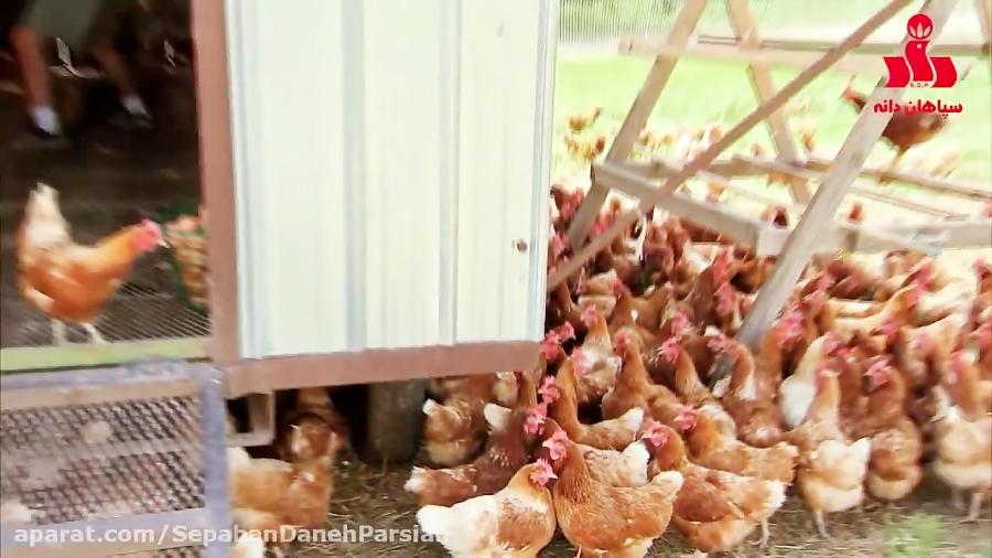 تخم مرغ ارگانیک