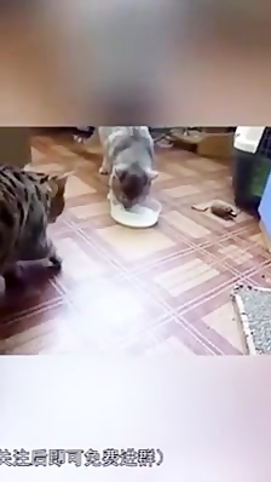 محبت حیوانات ب یکدیگر:)
