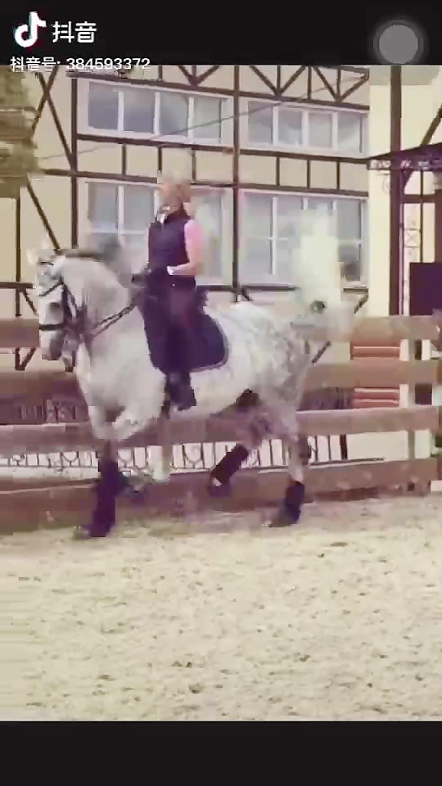 رقص پای اسب