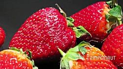 تایم لِپس توت فرنگی گلخانه ای - Rotting Strawberry TimeLapse