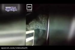 حضور ناگهانی یک پلنگ در شهرستان خواف!