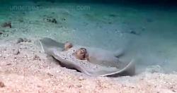 طبیعت زیر آب