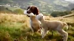 حیوانات هم محبت را میفهمند