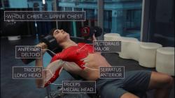 آموزش حرکت های بدنسازی  همراه با آناتومی بدن قسمت سوم