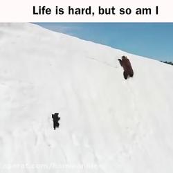 صحنه های شگفت انگیز تلاش یک بچه خرس برای بالارفتن روی برف