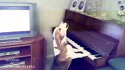 سگ آوازه خوان و پیانیست - شماره 1