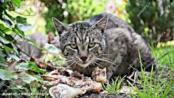 فوتیج غذا خوردن گربه ها