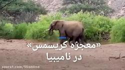 بچه فیلی که زنده ماند؛ «معجزه کریسمس» در نامیبیا