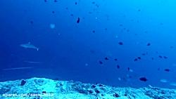 غواصی در مالدیو - کانال کوکا کرنر همراه با کوسه ها