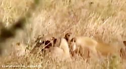 مستند شکار حیوانات عجیب و غریب