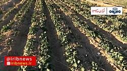 شیوهای نوین در کشاورزی