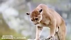 مستند زیبا از برترین فیلم های حیات وحش